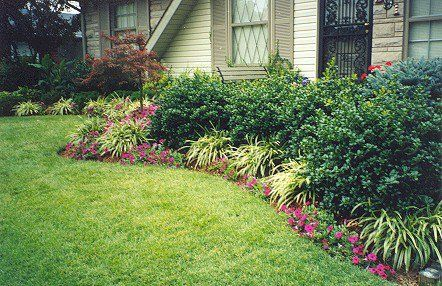 Landscaping with Dwarf Buford Holly, Japanese Maple, Sand Cherry,