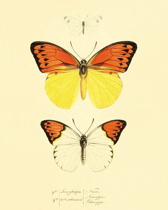 48 best Butterfly art images on Pinterest | Butterflies, Butterfly ...