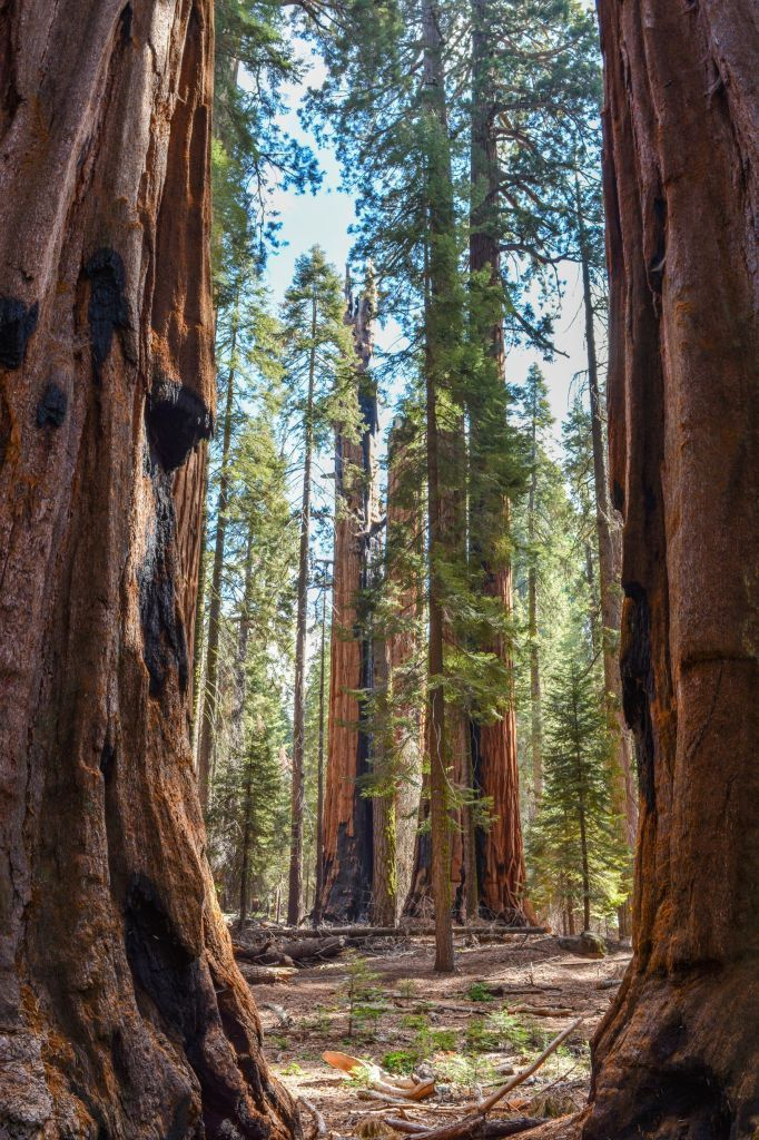 Things to Do in Sequoia and Kings Canyon National Parks