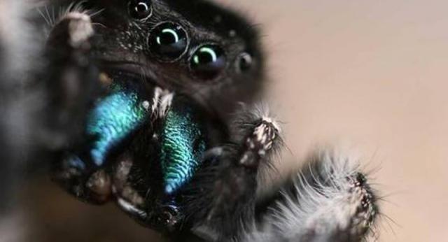 I ragni vi ascoltano? Scoprite perché è tutto vero...