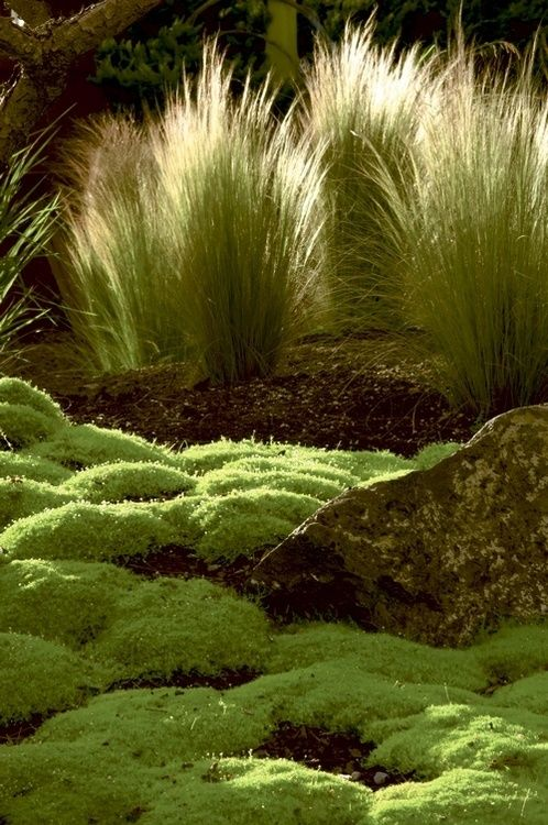 sweet-elysium: Gardens @pinterest.com