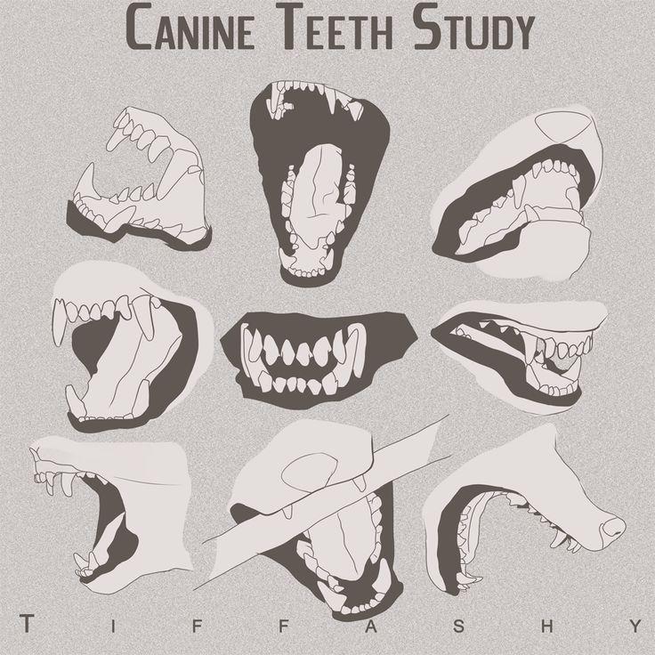 Wolf/Canine Teeth Study by TIFFASHY on DeviantArt