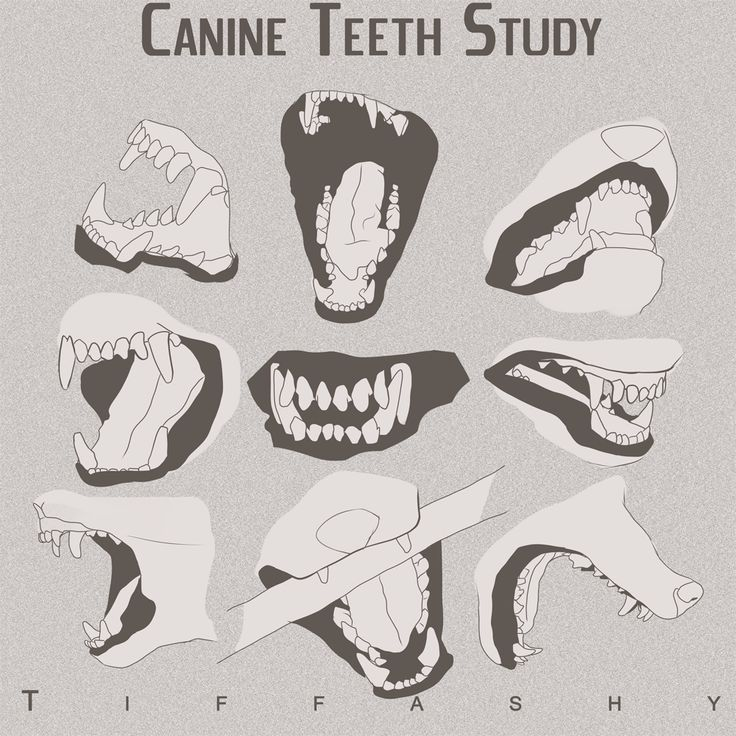 Wolf/Canine Teeth Study by TIFFASHY.deviantart.com on @DeviantArt