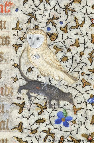 Owl with mouse in its talons   Book of Hours   France, Paris   ca. 1420–1425   The Morgan Library & Museum