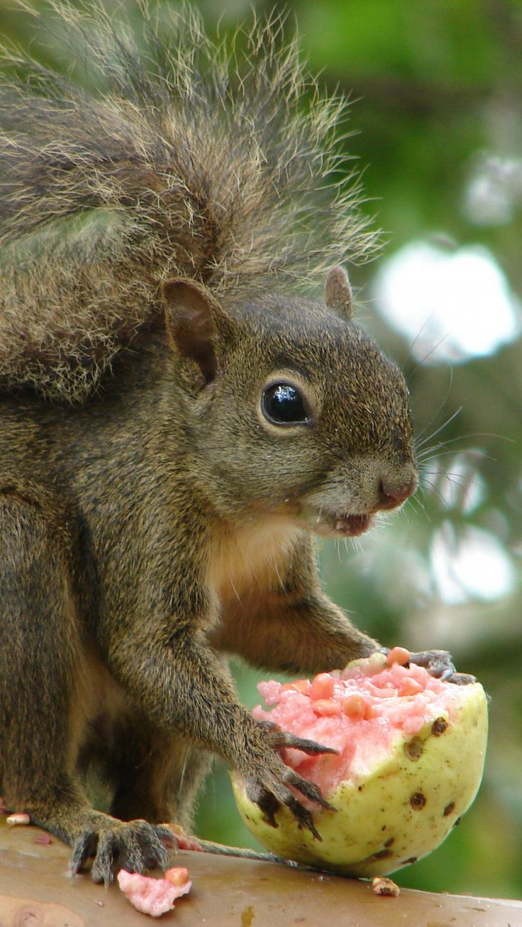 Get your paws off my supper! Adorable photos show baby ...   Baby Squirrel Diet