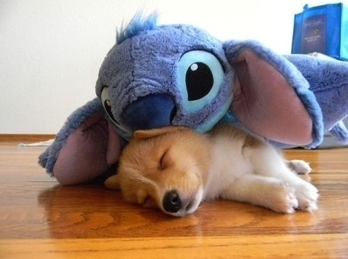 Stitch and the dog cute animals sleep