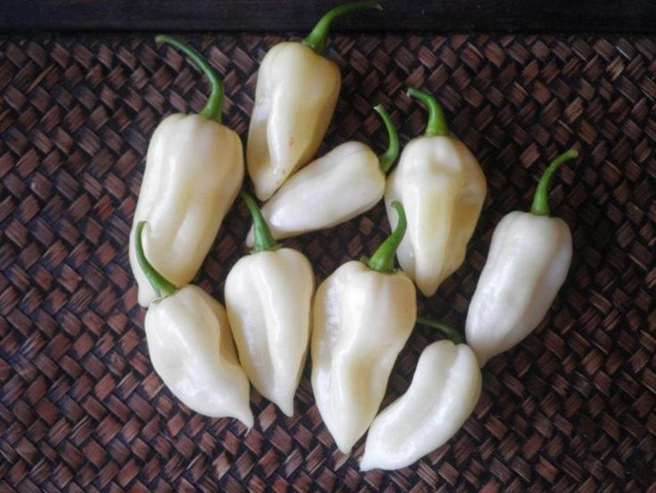 White Ghost Chili/ Bhut Jolokia ,also known as Naga Jolokia, Naga Morich, or the Ghost Chili( Organic Seeds) World's Hottest Pepper