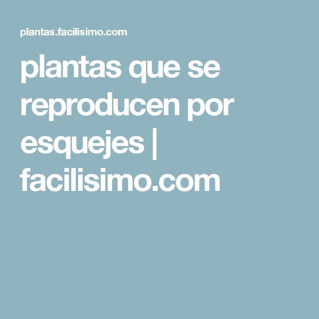 plantas que se reproducen por esquejes   facilisimo.com