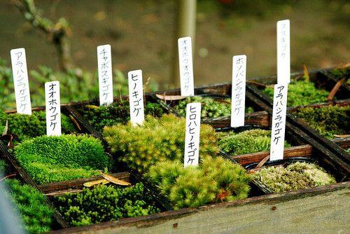 A Collection of Mosses, Labeled in Japanese