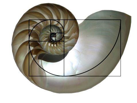[Image: 7ab0a152629ae8b068b070dae0482bbd--logari...-shell.jpg]