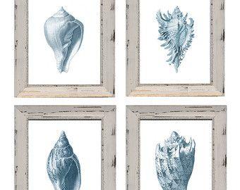 Conjunto de 4 grabados de cáscara azul pálido con descuento en papel acuarela. Imágenes antiguas de conchas azul precios de descuento
