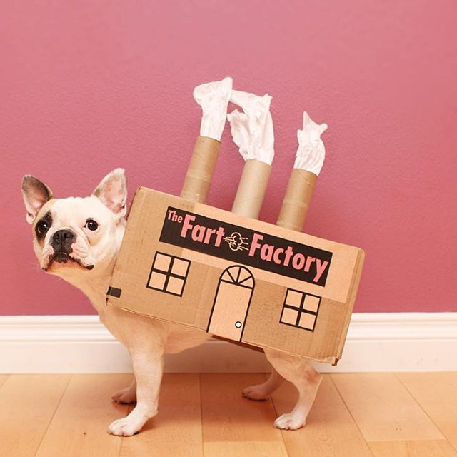 I Provide Natural Gas In Exchange For Treats 10 31