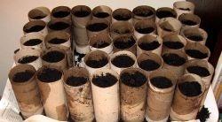 Gardening in eggshells  toilet paper rolls