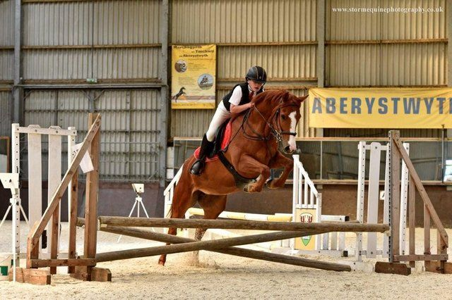 148 Dalsown Gwdi Hw Show Jumping Pony Ponies For Sale Show