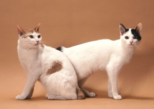 Czy koty się pocą?