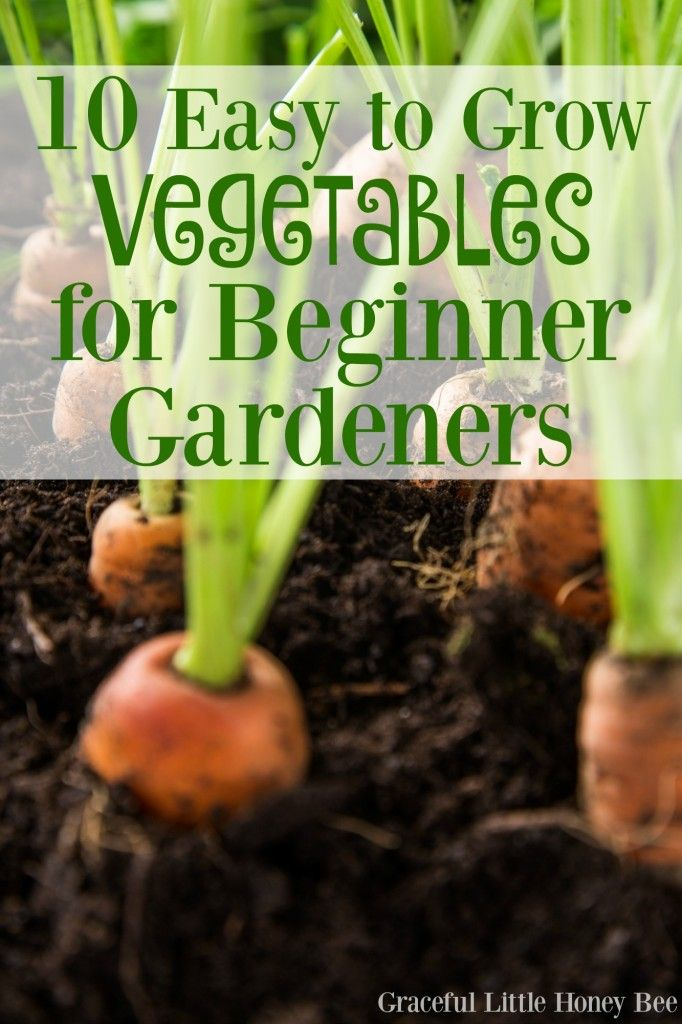 10 Easy to Grow Vegetables for Beginner Gardeners