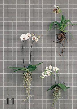 Orchideen ohne Topf im Bad