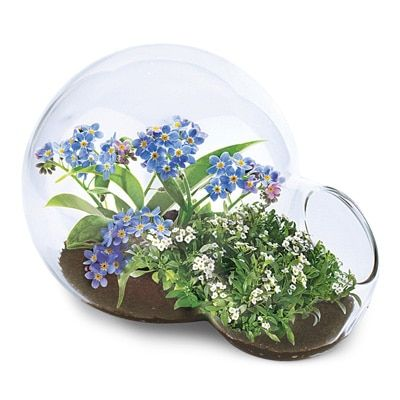 Fragrant Flowers Oasis Double Terrarium. ALSO ~ Ruby/clear quartz/citrine: http://www.uncommongoods.com/product/jeweled-nest-necklaces?source=blog_gg_mday_new_2017 ; pretty: http://www.collectionsetc.com/product/solar-dual-wind-spinner-garden-stake.aspx# , http://www.collectionsetc.com/product/elegant-hanging-wire-basket-planter.aspx# , https://www.pyramidcollection.com/itemdy00.aspx?ID=51,4181&T1=PC7190+BK+35