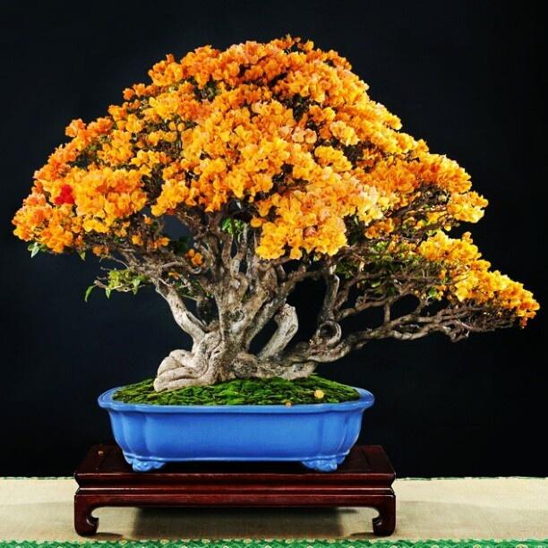 Garden Flower Plants