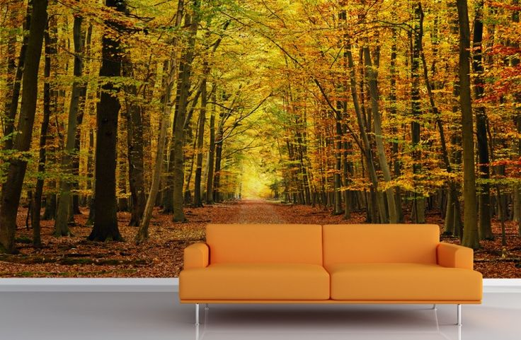 ... Autumn Forest Wall Mural Photo Part 25
