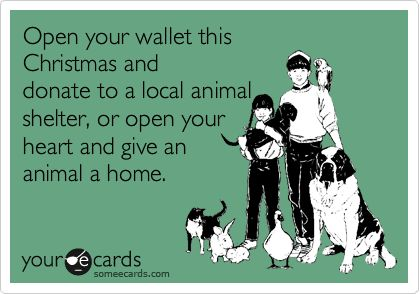 Christmas: Animal Rescue, Animal Shelters, Dogs, Pet, Christmas, Holidays, Donation, Local Animal, Furry Friends
