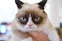 Grumpy Cat Just Got A Hollywood Movie Deal