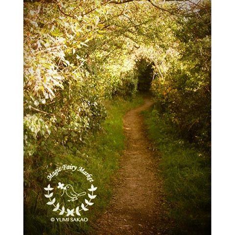 【fairy.yumipan】さんのInstagramをピンしています。 《* 妖精の国への小径 * The path to the fairy land * 実はこの道の先には、ケルトの古い教会があり、わたしは1人でそこまで走って行きました。道の入り口で真っ赤なコートを来たおばあさんが犬を連れていて、「あなたなら走って5分で着くわよ」と言われて時間もなかったので全速力で走って行きました。ゼイゼイ言いながら崩れ落ちた教会に着いて写真を撮っていたら、すぐ後からさっきの赤いコートのおばあさんが涼しい顔でやってきたのでかなりビビりました。 おばあさんは妖精かもしれないと思いながら、しばらく崩れ落ちた教会の美しさについて話してサヨナラを言い、元来た道を走っていたら、今度は、ハリーポッターに出てくるハグリッドにそっくりな髭もじゃの大男と、ギョロ目の小さな男が向こうからやってきて、これまた超ビビってしまった。。! ペコっと会釈してダッシュで車に戻りました。イギリスのコーンウォール、地図にも載っていない小さな村での出来事です✨ * * It was on the way to the old…