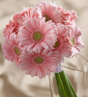 The FTD® Daisy Delight™ Bouquet http://www.larisflowers.com/product/the-ftd-daisy-delight-bouquet/display