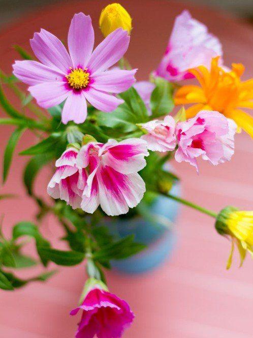 Открытка привет цветы
