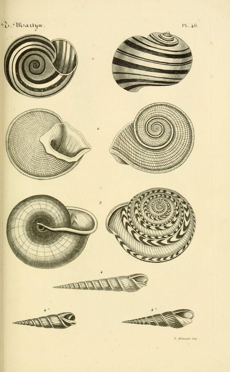 Thomas Martyn   Le conchyliologiste universel, ou, Figures des coquilles jusqu'à présent inconnues recueillies en divers voyages a la mer du sud depuis l'année 1764 (1845)