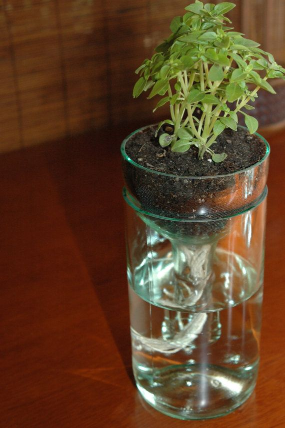 self watering planter made from recycled wine bottle. perfect