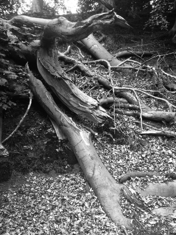Black and white Forrest. This is a picture that I have taken, I like how the trees have tangled up together.