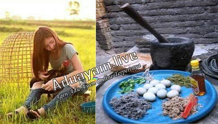 Resep Obat Tradisional Buat Memulihkan Tenaga Ayam Aduan S128 Ayam Pemulihan Resep