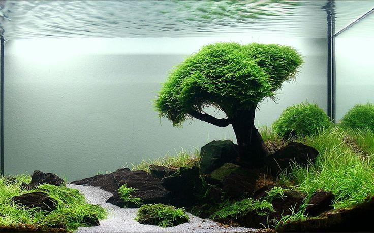7373 1 280 800 pixels aquarium landscapes Aquarium landscape