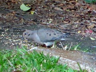 46 best images about foster 39 s backyard bird sanctuary on pinterest