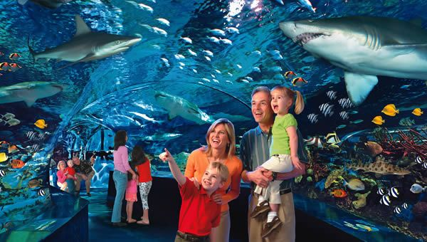 Ultimate Guide of Ripleys Aquarium Coupons and Discount Tickets for Ripley's Gatlinburg Aquarium: http://www.gatlinburgtnguide.com/coupons-discounts/ripleys-aquarium-coupons-and-discount-tickets/