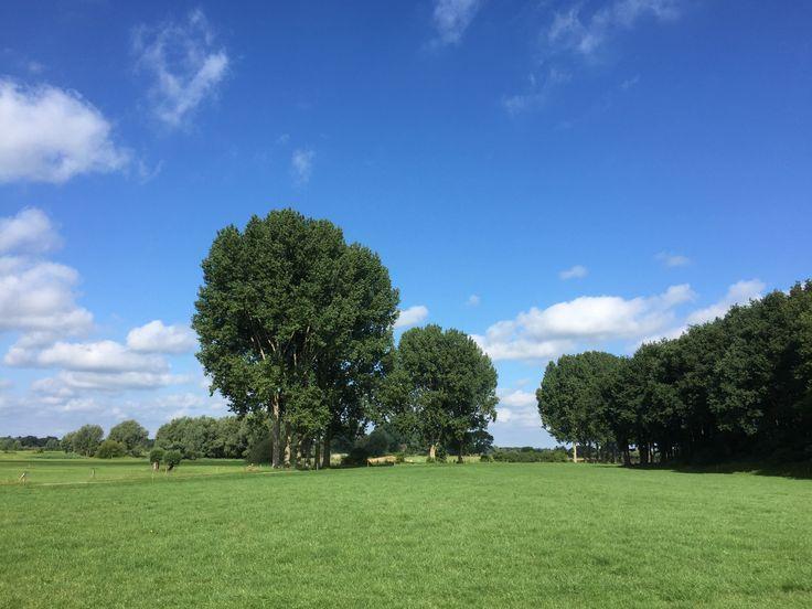 2017-07-09 Hollands landschap in de uiterwaarden van de IJssel bij Gorssel