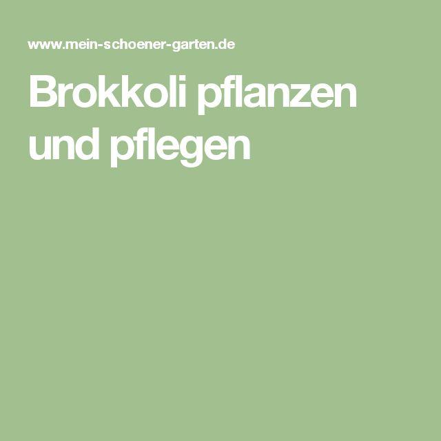 Brokkoli pflanzen und pflegen