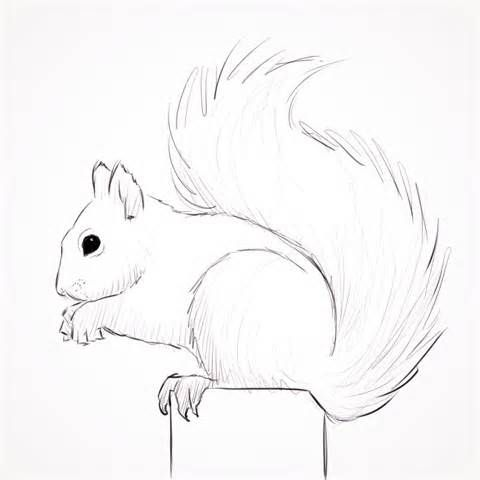 284 best SQUIRRELS SKETCHES images on Pinterest Squirrels