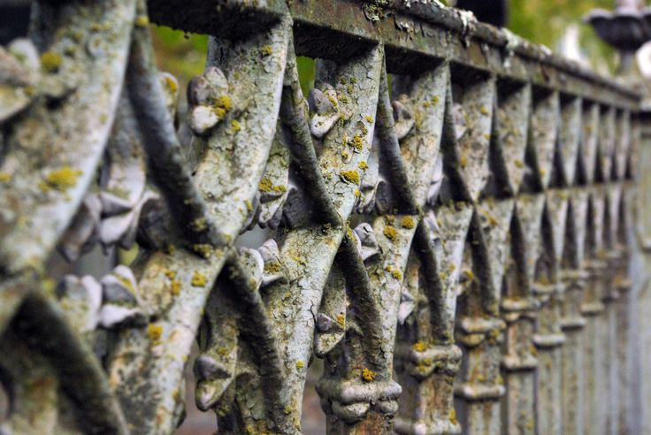 Metal fence covert in moss.