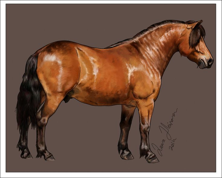 46 best horse decor things images on pinterest horses horse mypaint and wacom tablet reference photo taken by me yey how to draw a horse in mypaint tutorial voltagebd Image collections
