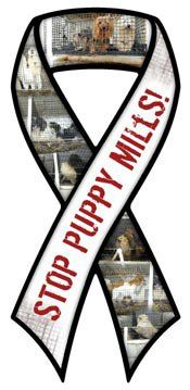 STOP PUPPY MILLS RIBBON