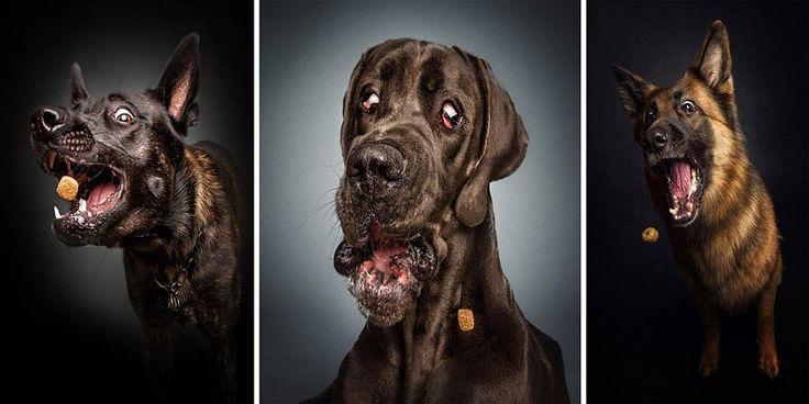 Фотограф Кристиан Филер (Christian Vieler) из Вальтропа (Германия) создает комические фотографии собак, пытающихся словить пастью еду. Кристиан старается зафиксировать именно тот момент, когда соба…