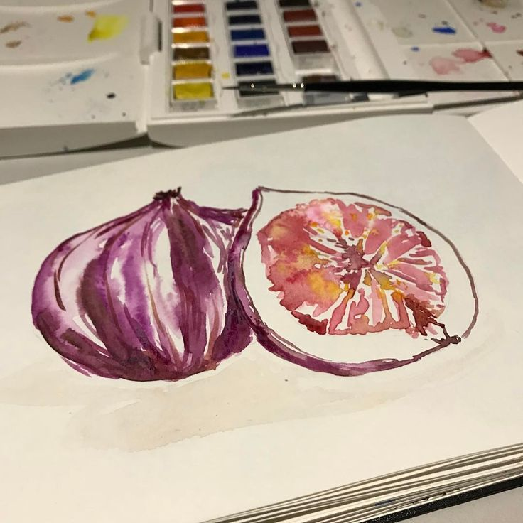 """Day 14/100 of 100 days of food illustration. Beautiful Figs!   #The100DayProject #100dayproject #100daysoffoo #fig #foodillustration…"""""""