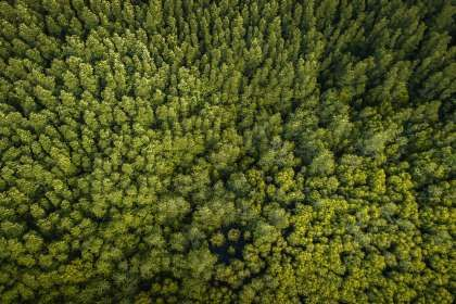 These Drones Can Plant 100,000 Trees in One Day http://mentalfloss.com/article/503527/these-drones-can-plant-100000-trees-one-day#skyquestchile?utm_campaign=crowdfire&utm_content=crowdfire&utm_medium=social&utm_source=pinterest