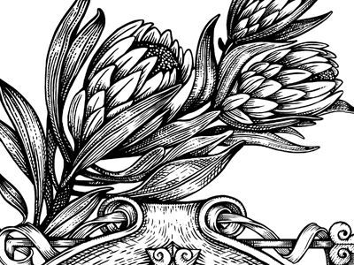 protea engraving - Google Search