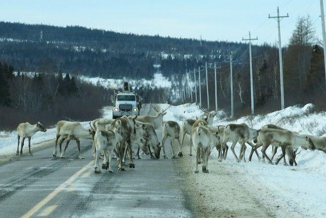 Pauline Dean Buchans, Newfoundland and Labrador Canada Date shot: January 6, 2014