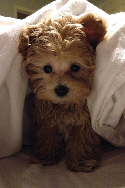 12 adorable pets who are staying cozy in the cold
