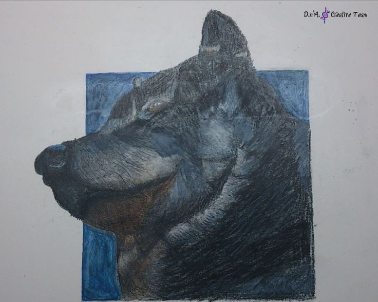 -WOLF -Colored pencils on thick cardboard -Measures: 35x50 cm  https://www.etsy.com/listing/213224090/wolfs-head-sketch-colored-pencils-on?ref=shop_home_active_24