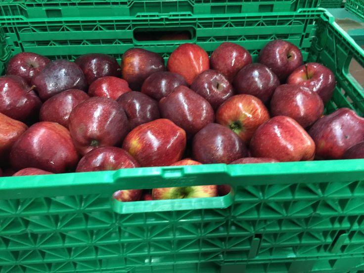 ΜΗΛΟ: Πρέπει να τρώγεται με τη φλούδα, αφού προηγουμένως έχει πλυθεί πολύ καλά. H φλούδα του μήλου περιέχει πολλές βιταμίνες και αδιάλυτες ίνες, οι οποίες βοηθούν στην καλή λειτουργία του πεπτικού συστήματος.  ΧΡΟΝΗΣ- Realfruit Κεντρικά γραφεία Φιλίππου 10, Έδεσσα Τ.Κ.: 58200 Τηλ: 23810- 23237 email: sales@realfruit.gr website: www.realfruit.gr